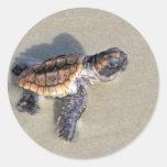 Baby Sea Turtle, Just Hatched Round Sticker