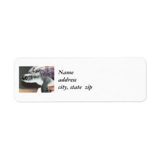 Baby Sea Turtle Retuen Address Labels