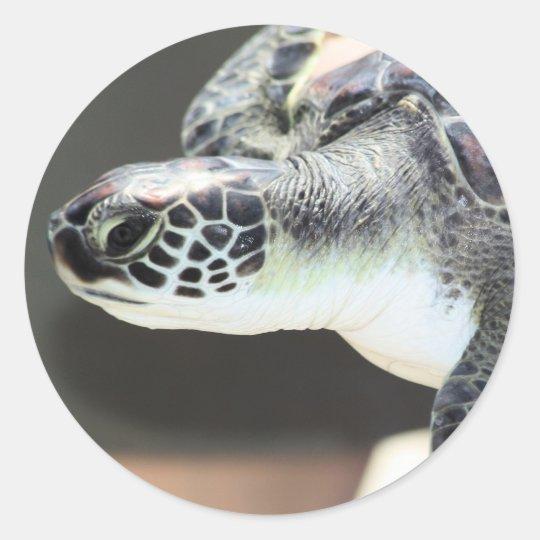 Baby Sea Turtle Sticker