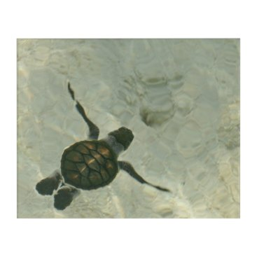 Beach Themed Baby Sea Turtle Swimming Out To Sea Acrylic Wall Art