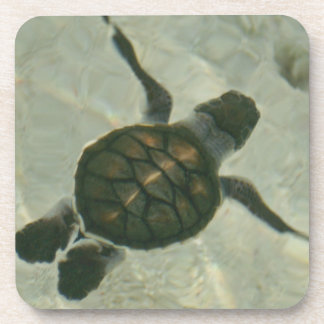Baby Sea Turtle Swimming Out To Sea Coaster