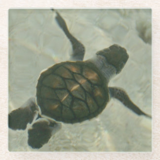 Baby Sea Turtle Swimming Out To Sea Glass Coaster