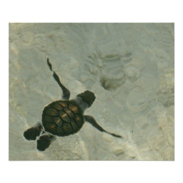 Beach Themed Baby Sea Turtle Swimming Out To Sea Poster