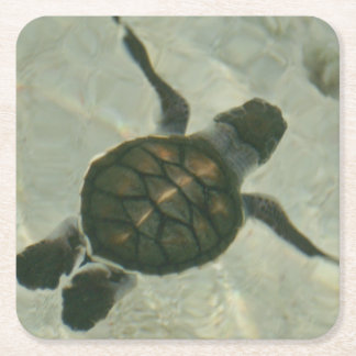 Baby Sea Turtle Swimming Out To Sea Square Paper Coaster