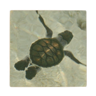 Baby Sea Turtle Swimming Out To Sea Wood Coaster
