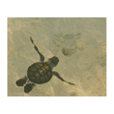 Beach Themed Baby Sea Turtle Swimming Out To Sea Wood Print
