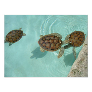 Baby sea turtles poster