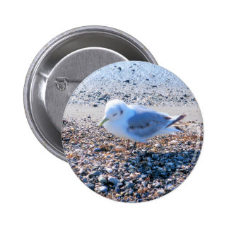 baby seagul pinback button