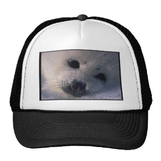 baby Seal Trucker Hats