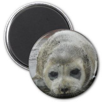baby seal kotz ak 2 inch round magnet