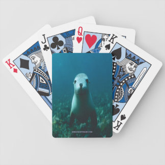 BABY SEAL DECK OF CARDS