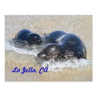Baby seals in La Jolla Post Cards