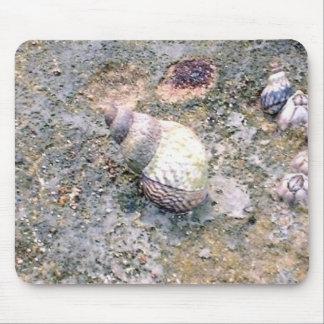 Baby Seashells Mouse Pad