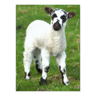 Baby Sheep Card