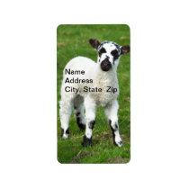 Baby Sheep Label