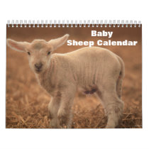 Baby Sheep Lamb Calendar