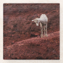 Baby sheep on red rocks glass coaster