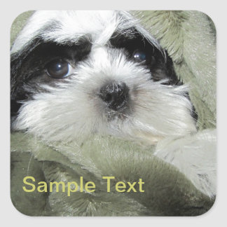 Baby Shih Tzu Puppy to Personalize Square Stickers