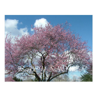 baby shower spring cherry blossoming tree post cards