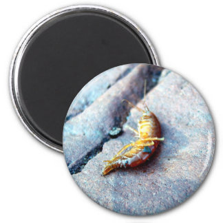 Baby Shrimp Magnet