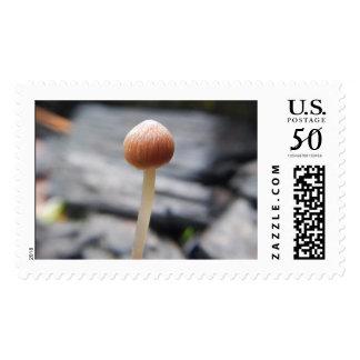 Baby Shroom Postage