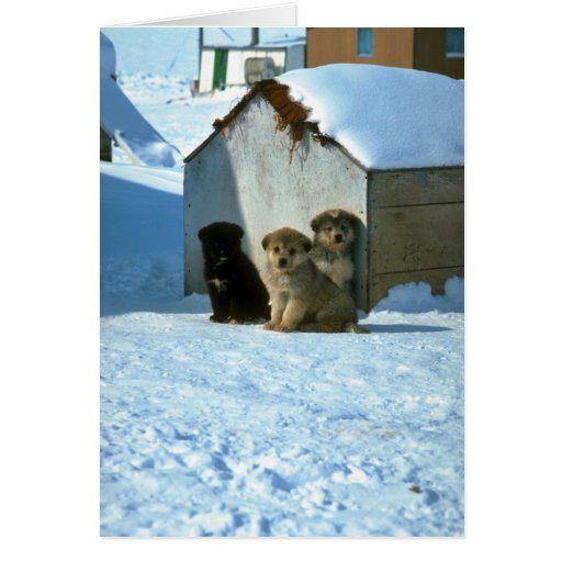 Baby sled dogs, Greenland Card