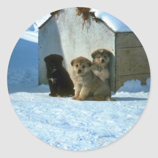 Baby sled dogs, Greenland Stickers