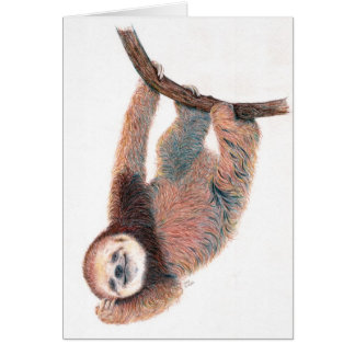 Baby sloth grooming itself card