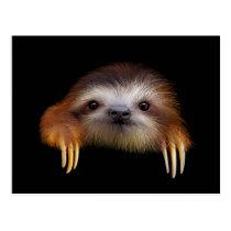 Baby Sloth Postcard