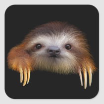 Baby Sloth Square Sticker