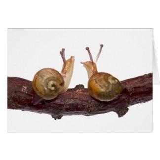 Baby Snail Talk Card