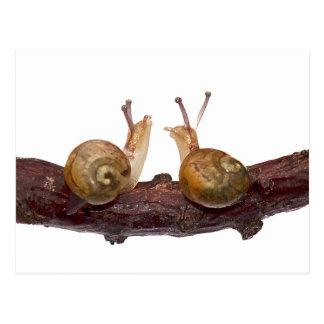 Baby Snail Talk Postcard