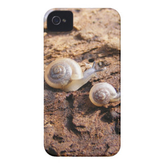 Baby Snails iPhone 4 Cover