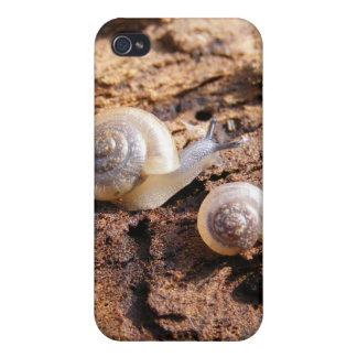 Baby Snails iPhone 4/4S Cases