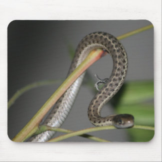Baby Snake 2 Mouse Pad