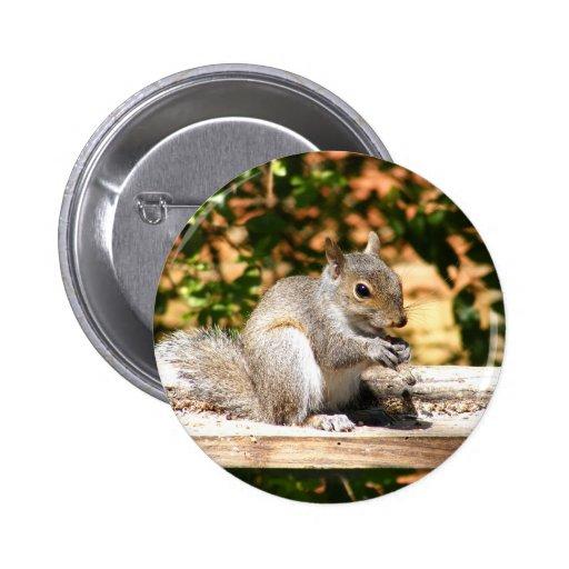 Baby Squirrel 2 Inch Round Button