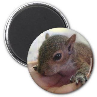 Baby Squirrel 2 Inch Round Magnet