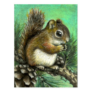 Baby squirrel and cones postcard