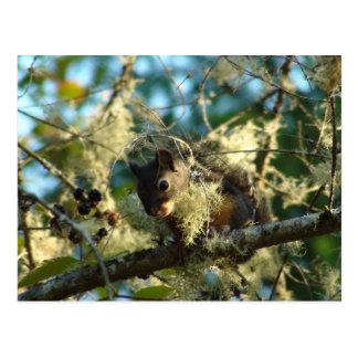 Baby Squirrel in Blackberries Postcard