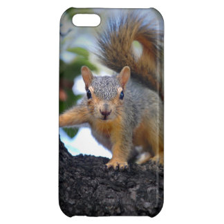 Baby Squirrel in Tree Cover For iPhone 5C