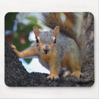 Baby Squirrel in Tree Mouse Pad