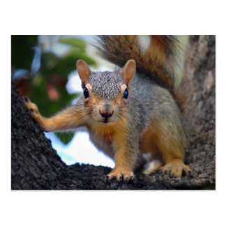 Baby Squirrel in Tree Postcard