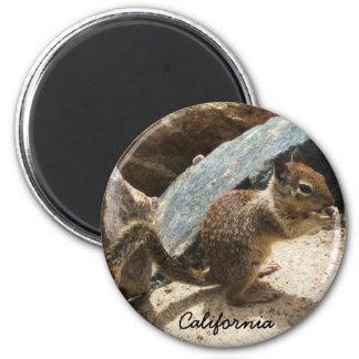 Baby Squirrel Fridge Magnet