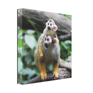Baby Squirrel Monkey Canvas Print