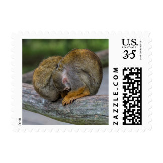 Baby Squirrel Monkey Postage