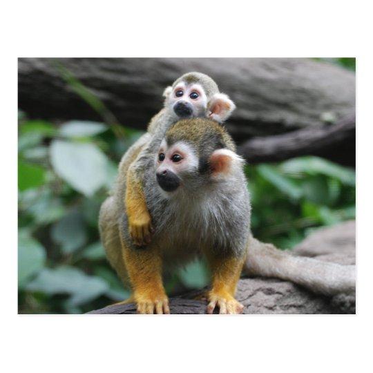 Baby Squirrel Monkey Postcard
