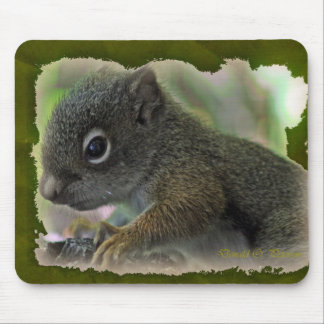 baby squirrel mouse pad