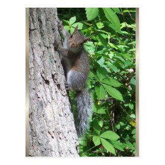 """""""Baby Squirrel"""" Postcard"""