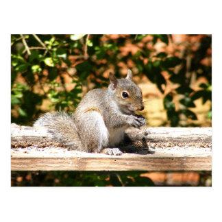 Baby Squirrel Postcard