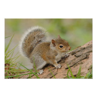 Baby Squirrel Sitting On Tree Trunk Poster
